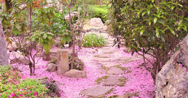 Hanami all 39 orto botanico roma giappone in italia for Giardini giapponesi milano