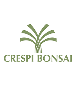 Crespi Bonsai