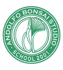 Andolfo Bonsai Studio
